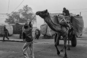Marktstelle für Viehfutter, Indien 2011