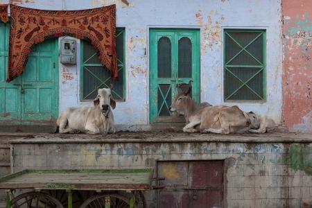 Pushkar, Indien 20111