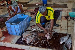 Fischverarbeitung im Oman (2011)