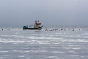 Zwischen Paracas und den Ballestas Inseln, Peru 2916