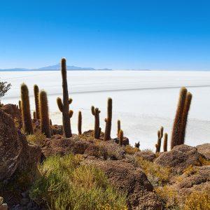 Insel Incahuasi im Salar de Uyuni, Bolivien August 2016