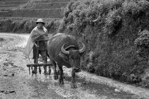 In den Bergen nördlich von Sapa, Vietnam 2012